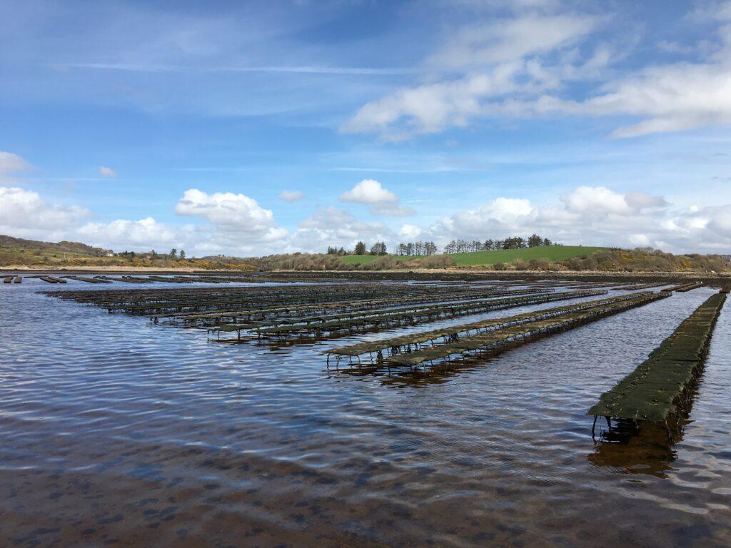 national seafood survey aqua