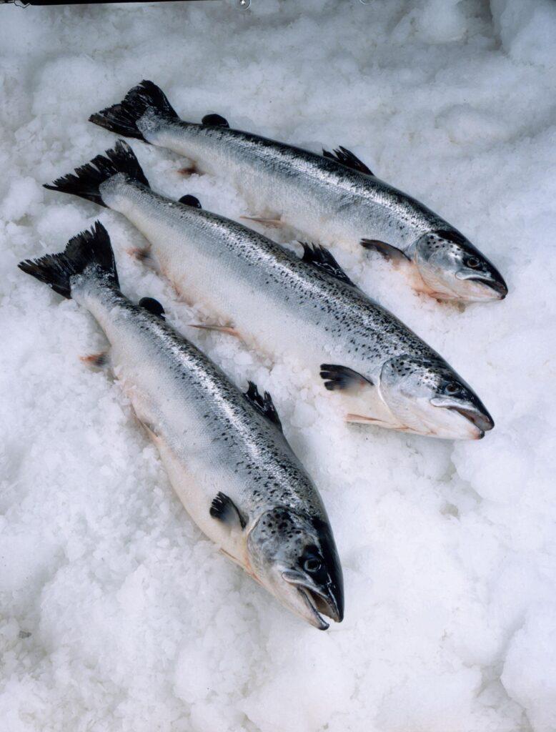 salmon for ARC-min